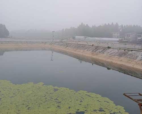 鱼苗养殖基地